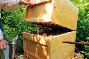 Bienenbetreuung durch Marion & Michael