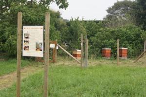 Jubiläumsgarten-3